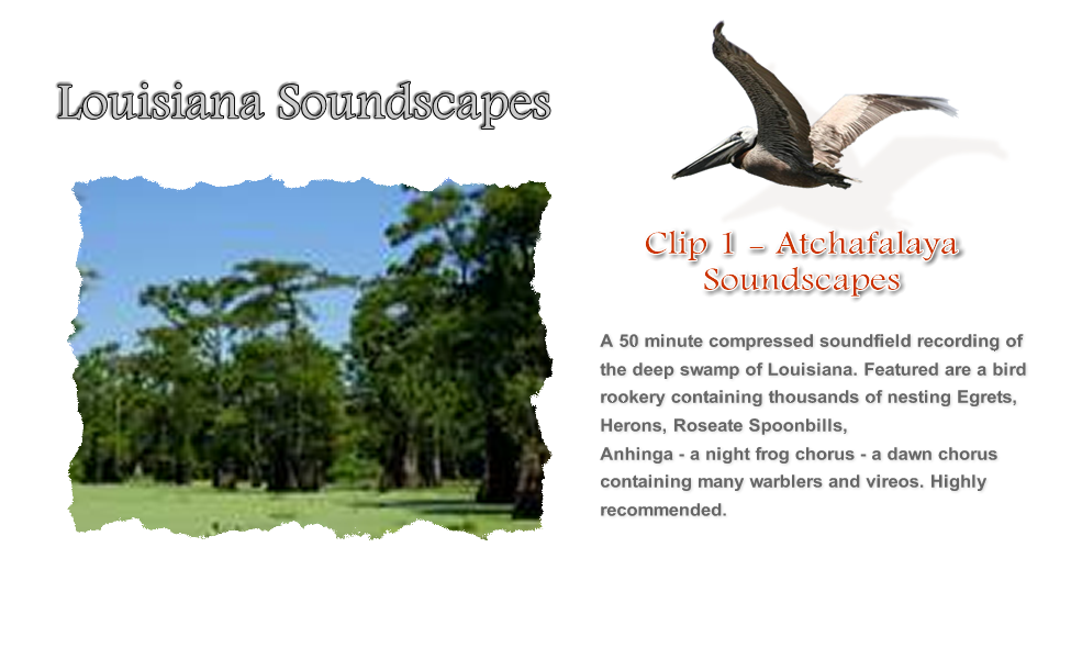 Atchafalaya Soundscapes